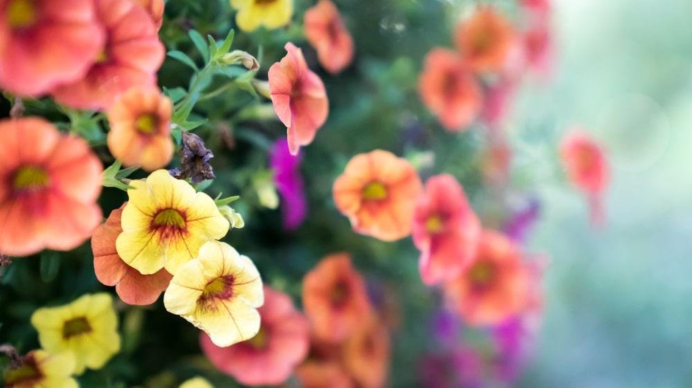 Beautiful flowers from good maintenance
