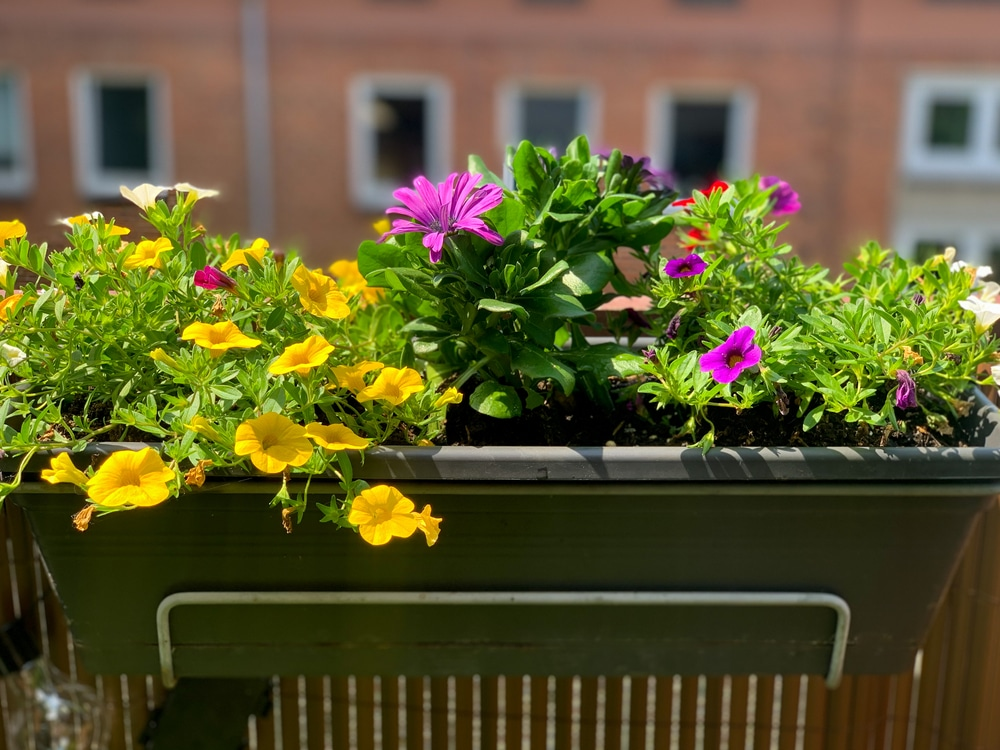 Healthy plants growing with appropriate sun