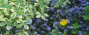 creating a calming shade garden is not difficult with a proper guide.