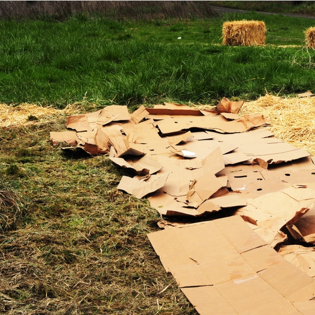 Cardboard is not very attract and can leach ink into the soil