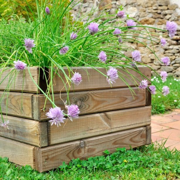 Chives can flower and attract bees or be eaten
