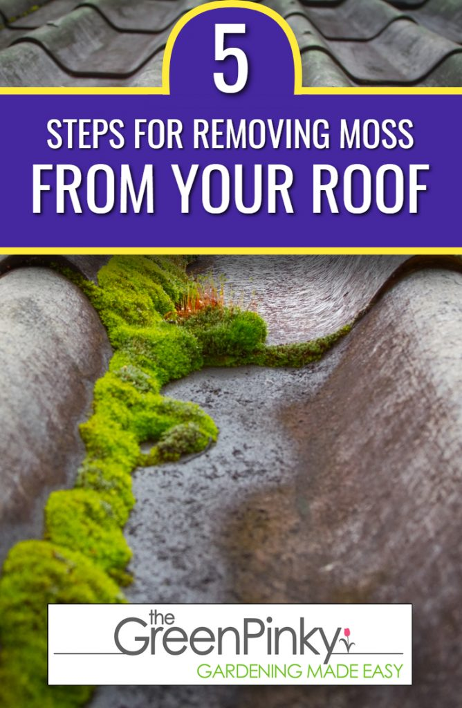 Cleaning moss from roof requires steps to follow in a particular order