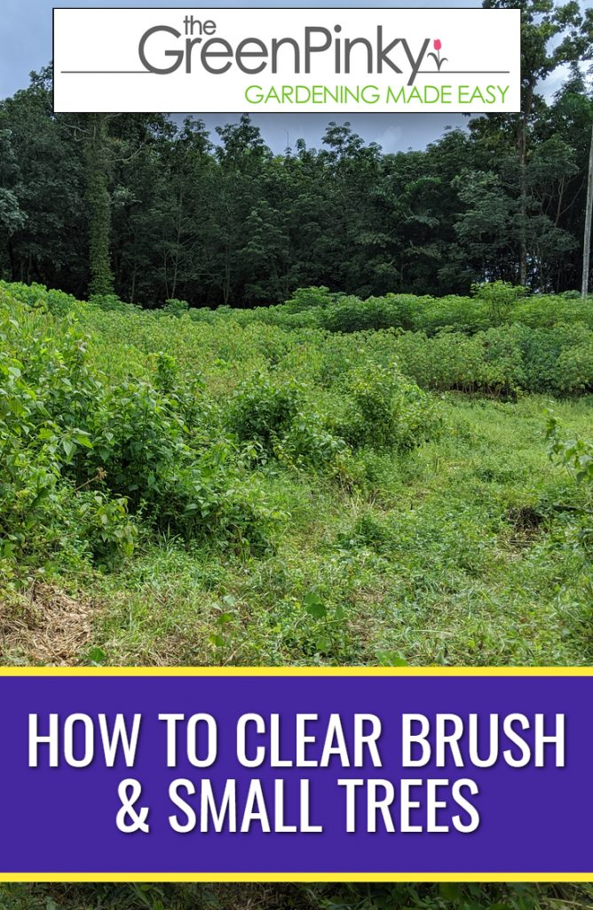 Brush and trees need to be removed with proper technique and safely