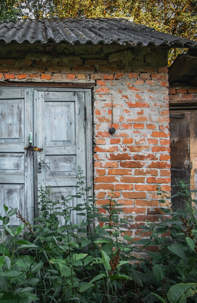 A shed with rampant overgrowth that needs to be gotten rid of