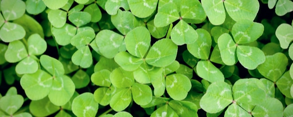 How to Get Rid of Clover: A Lawn Guide