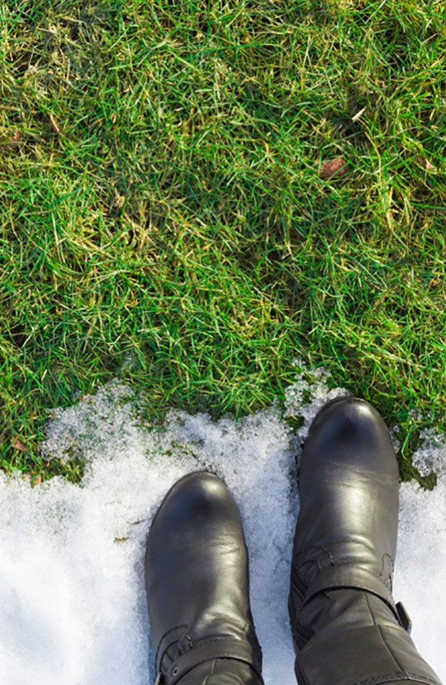 Cold grass need lawn winterizers to survive.