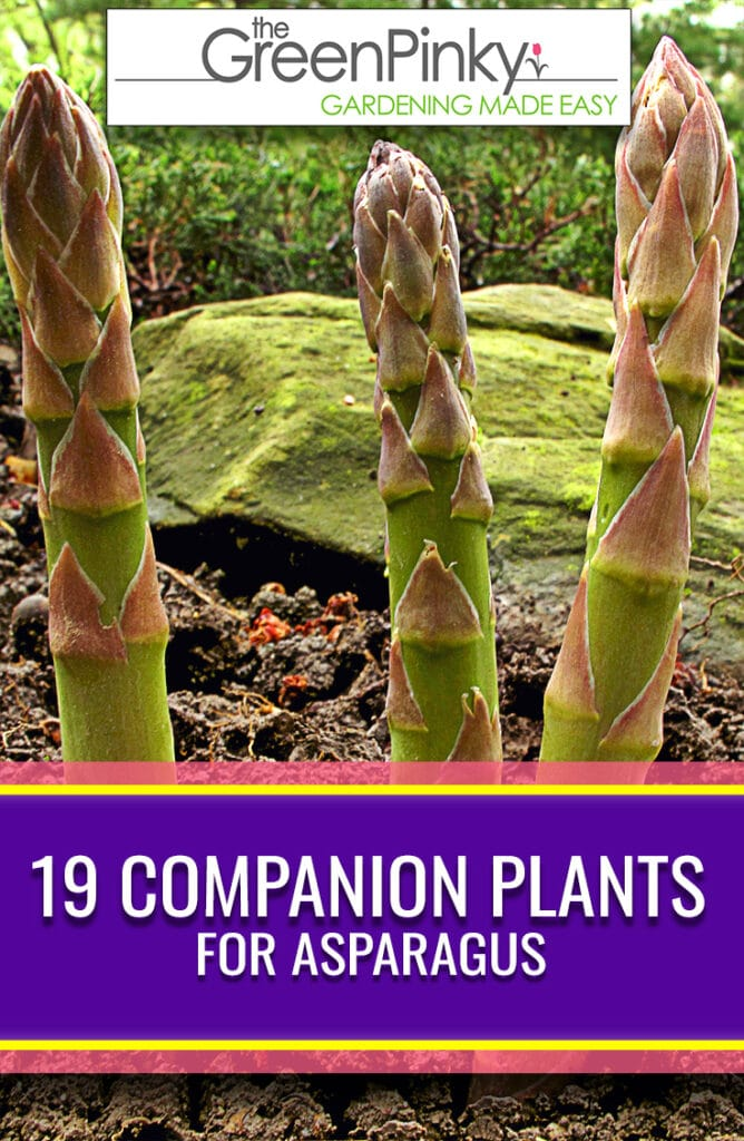 Companion planting is extremely beneficial for vegetables and flowers. This list of 19 of them will increase your yields