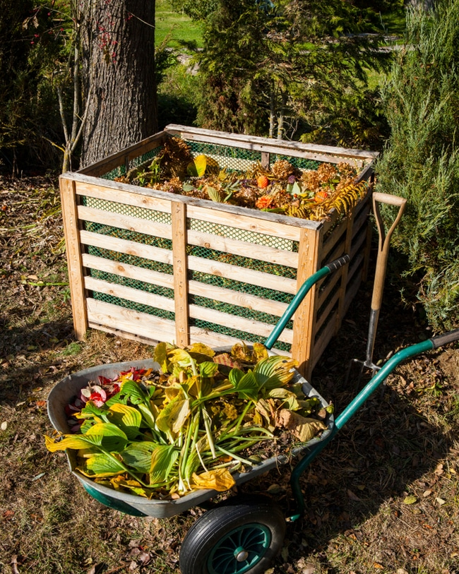 Compost bin with all sorts of green and brown organic materials.