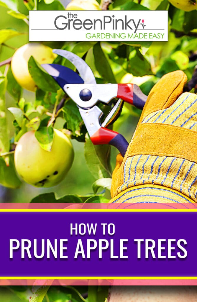 This guide will help you learn how to cut apple trees the correct way.