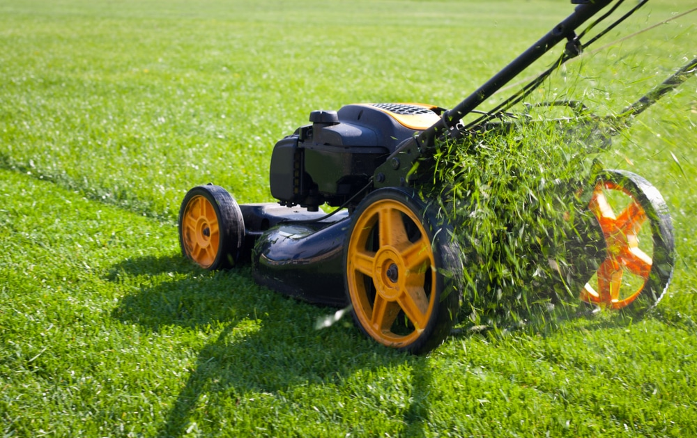 A man pushing a lawnmower with fresh clippings coming out of the back.