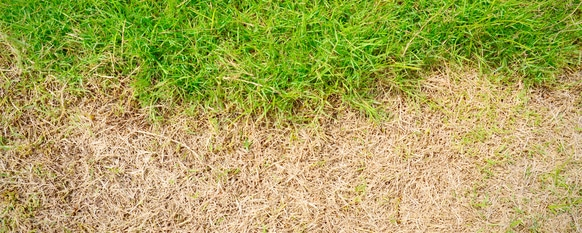 What to Do About Dead Grass
