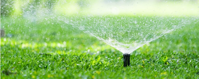 Watering the proper amount of time for lawn health