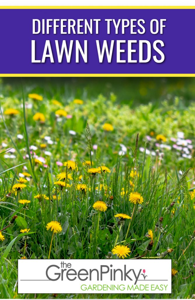 Multiple types of weeds can be difficult to differentiate from each other