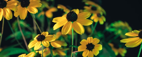 Different types of flowers will add variety to your garden