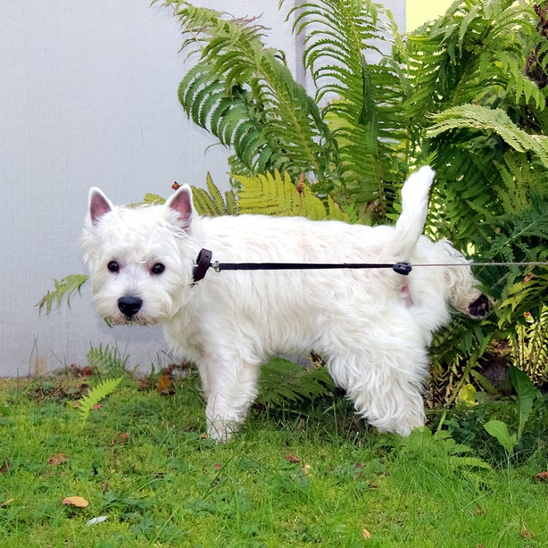 Dog urine can cause dead spots in a lawn