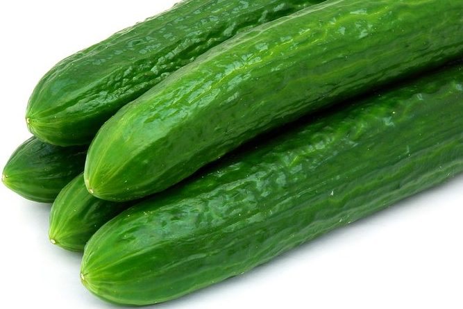 Early spring cucumbers