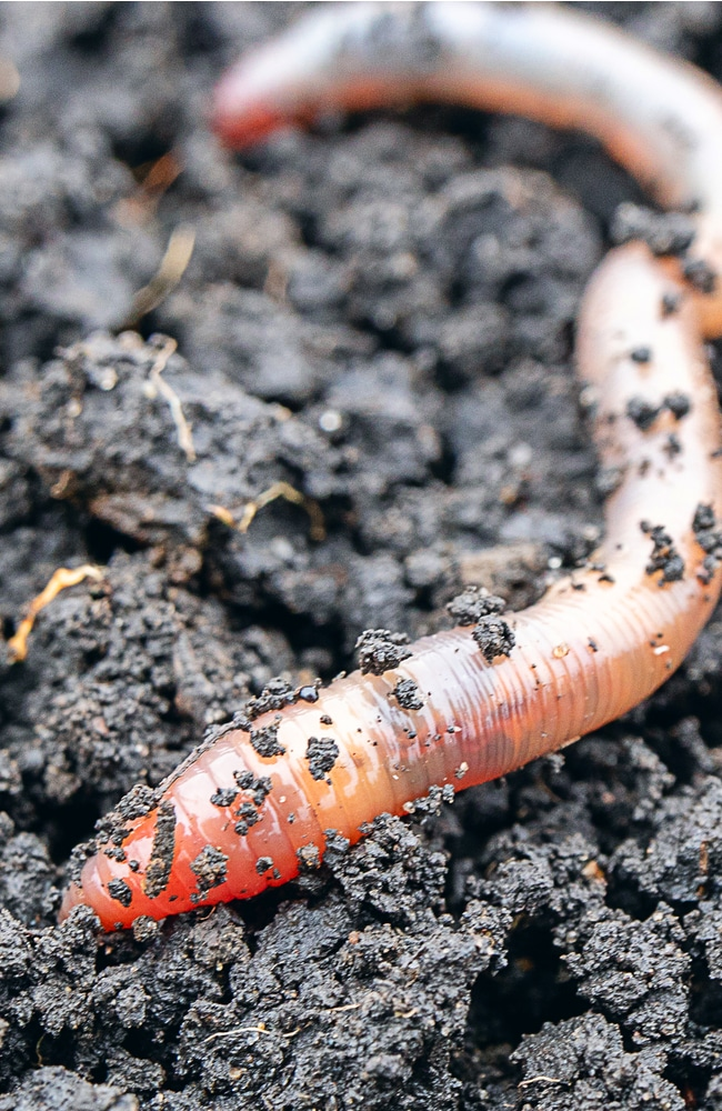 Earthworms help aerate soil and bring nutrients
