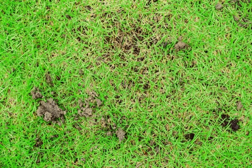 Earthworms can aerate soil to help root zones