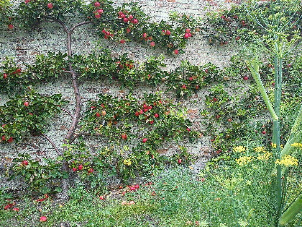 Espalier is a technique in cutting that shapes the branches in a very particular manner.