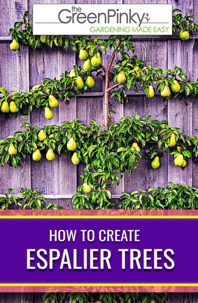 Pears can make a great candidate to create this structure that yields good harvests