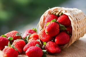 Ripe strawberries spilling out of a woven basket after harvest