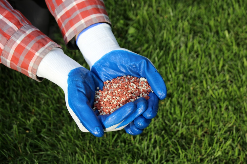 A person wearing blue gloves is holding red and white granular fertilizer in his or her hands