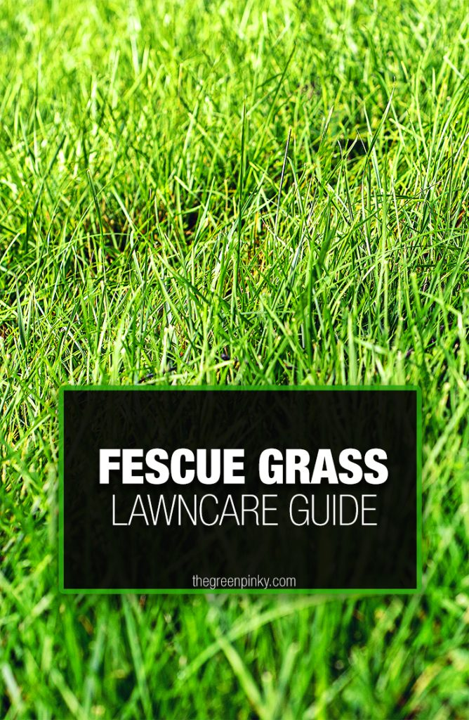 Fescue lawncare requires particular maintenance tips from a care guide