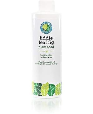 Fig plant food liquid fertilization for healthy roots