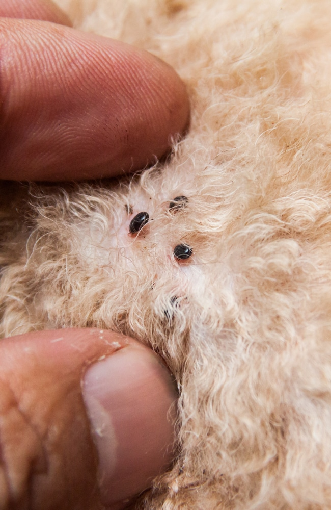 Flea can be carried onto your property by your pets