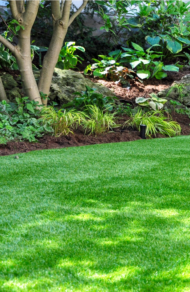fleas like to grow in shaded areas of your lawn