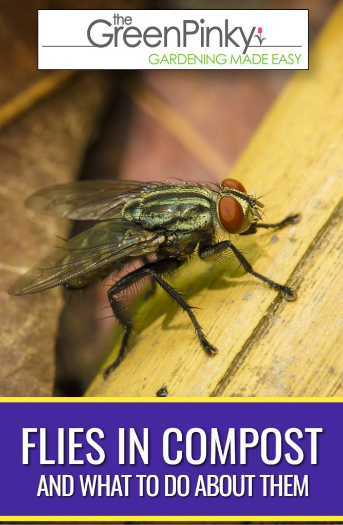 Fly infestations frequently take over compost bins.
