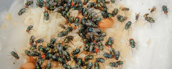 flies on garbage can be problematic if not gotten rid of