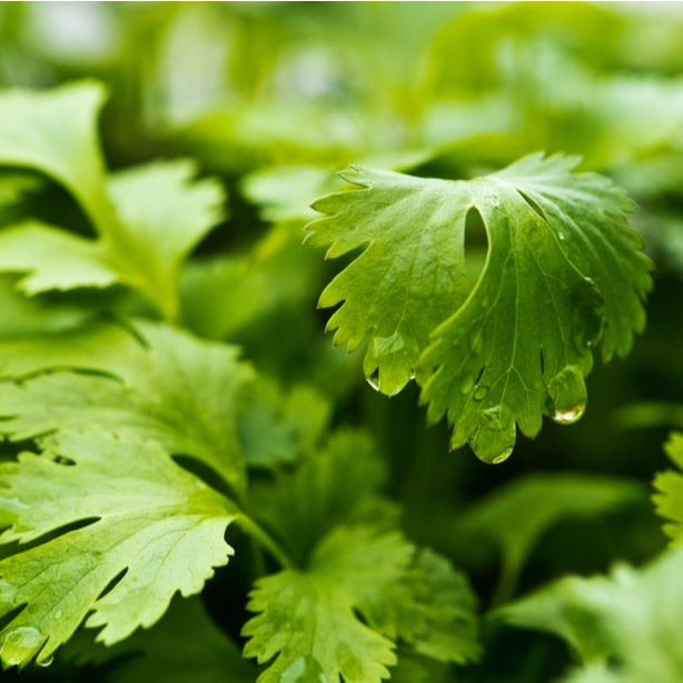 You will soon find the delights of having fresh herbs on hand.