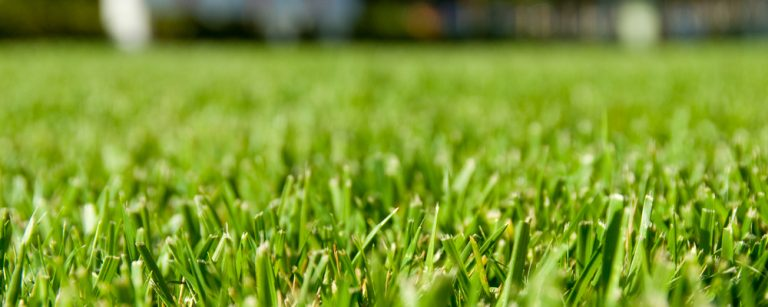Beautifully trimmed grass with patterns