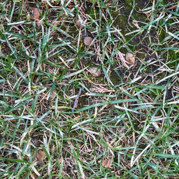 White fungus spots can be unsightly and needs to be fixed with instructions