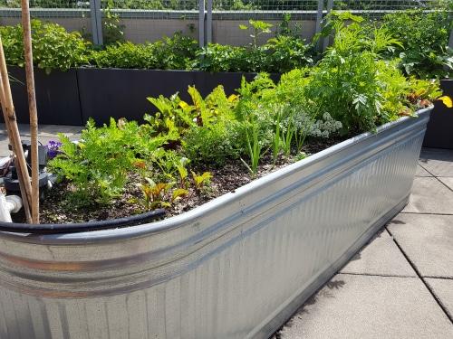 15 Trough Planter Ideas