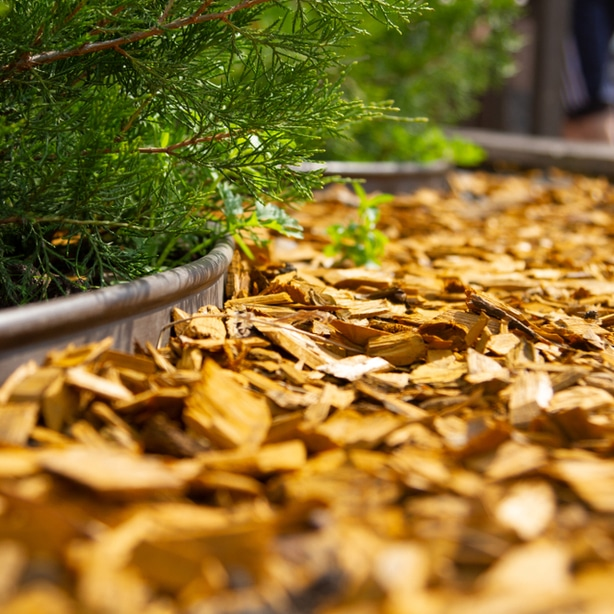 Gold mulch has recently become more popular