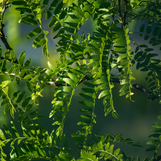 Green healthy foliage that is receiving proper sun exposure
