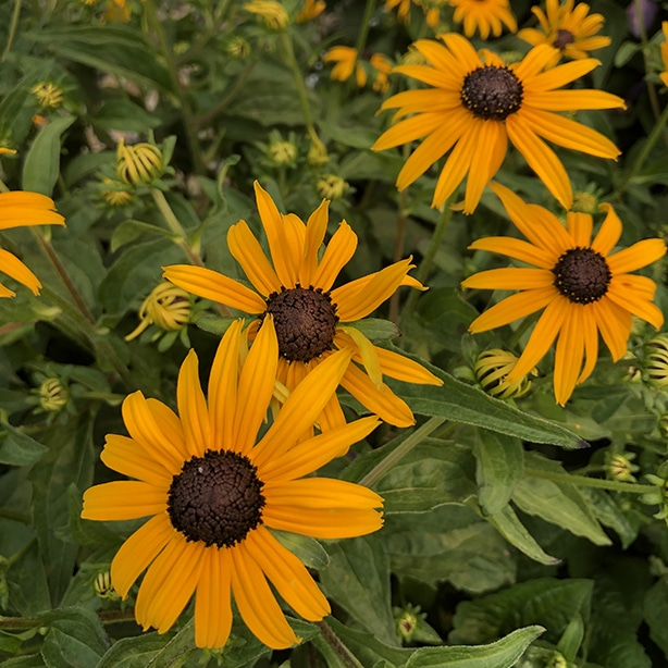 Proper care will helps these plants create beautiful blooms