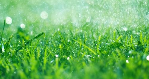Healthy grass after receiving rain
