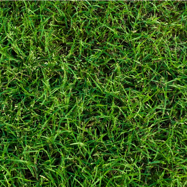 Healthy grass will have flourishing roots.