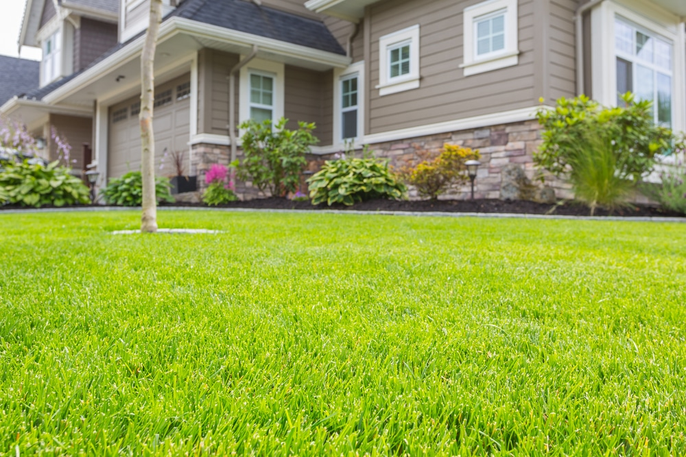 A beautiful green lawn in front of a house