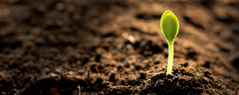 5 Steps to Create Your Own Living Soil
