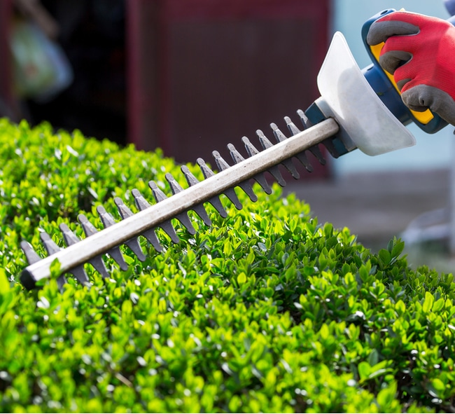 With a hedge trimmer you can shape bushes more quickly
