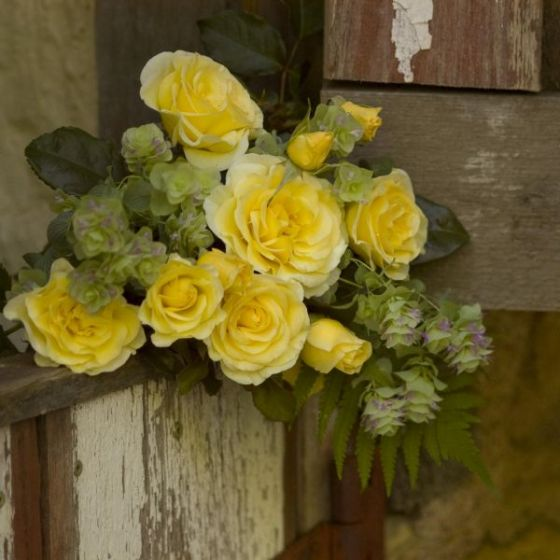 High voltage flowers have a yolk yellow color that is delicate and elegant
