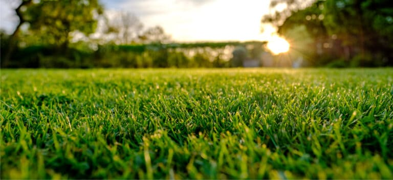 Fertilizing turf is important for robust and healthy growth.