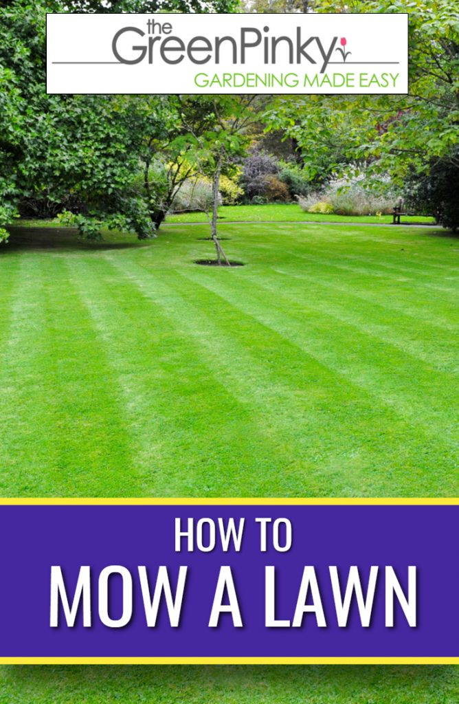 Overview picture for how to mow a lawn. in the picture itself is a freshly mowed lawn with stripes that run vertically.