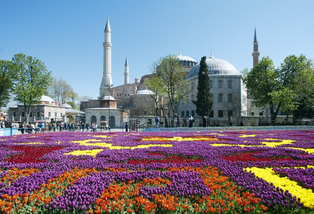 A bed of different colored roses in a specific pattern in istanbul