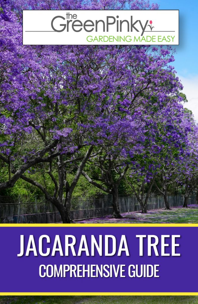 Jacarandas beautifully lining a fence with the proper care from a guide