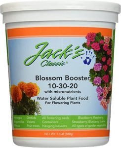 Blossom booster will help plumeria bloom faster and grow more optimally